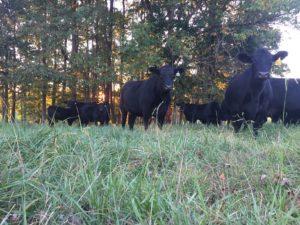 Cover photo for 2017 Livestock Newsletter