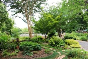 Cover photo for Pruning Trees & Shrubs in Your Landscape