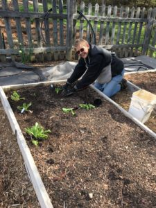 An Extension Master Gardener Volunteer working in Forsyth County's Demonstration Garden