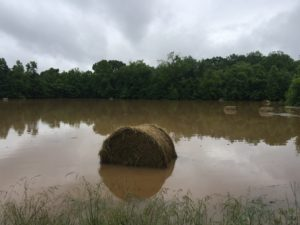 Hay in flooded area