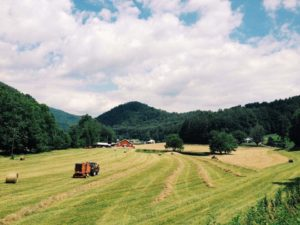 Cover photo for +/- 42 Acres of Pasture and Hay Ground for Lease Near Whittier