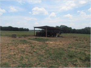 Image of Beth Tucker farm