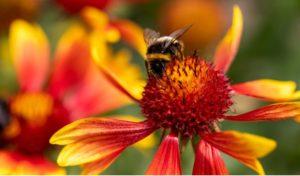 Cover photo for Tanglewood Park Arboretum Announces 2020 Spring Adult Education Classes!