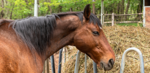 Horse at a Hay Feeder