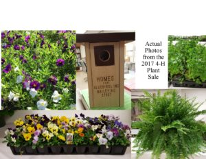 Plants from Plant Sale