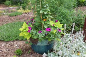 Plants growing in a pot