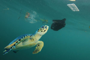 Sea turtle in polluted sea