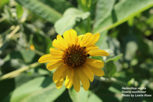 Cover photo for What's in Bloom - Week of July 30