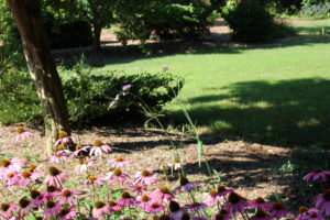 Cover photo for What's in Bloom - Week of July 16