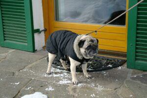 Cover photo for Keep Your Pets Warm and Safe This Winter