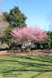 Cover photo for What's in Bloom in Forsyth County - March 4