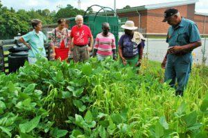 Volunteers looking at cover crops