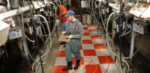 Cover photo for Dairy Grants Available for Farmers and Processors